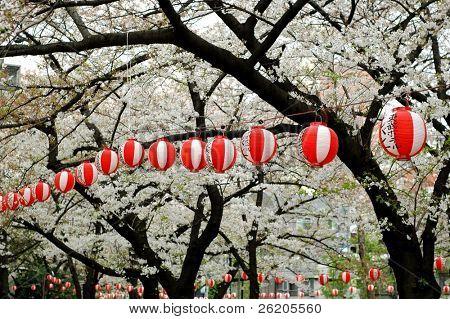 Japanese lantern at Sakura Festival in Tokyo