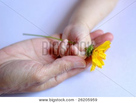 Mother's and baby's hand with flower