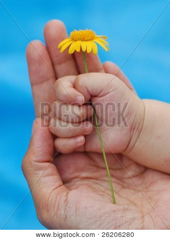 Mother's and baby's hand with little flower