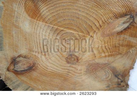 Saw Cut Of Pine-Tree