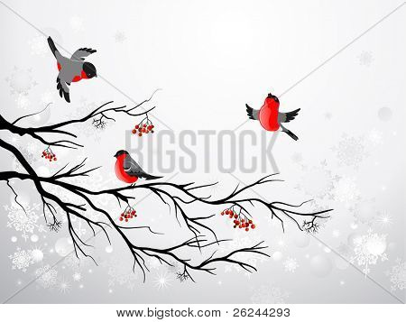 Branch and birds bullfinch with space for text