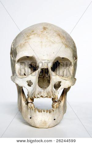 white skull against white background