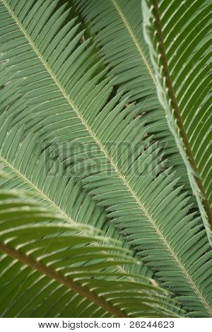 Diagonal fern