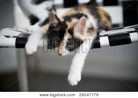 Kitten sprawled on a chair looking lazy