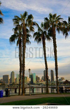 San Diego from Coronado through the palm trees