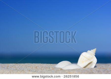 Three seashells on the tropical beach.