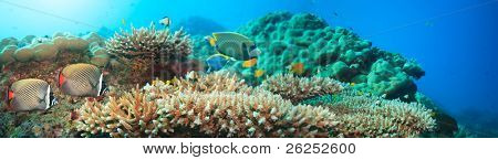 Underwater panorama with coral and fishes. Andaman sea. Merged from 5 images
