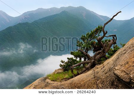 dry pine against cloudy seorak mountains at the Seorak-san National Park, South korea