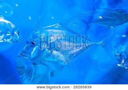 torpical fishes at Seoul Coex Oceanarium