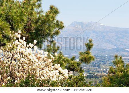 View of Hallasan mountain - symbol of Jeju-do island Korea