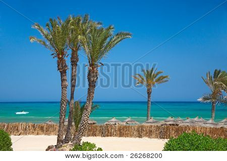 thatched sunshades and palm trees