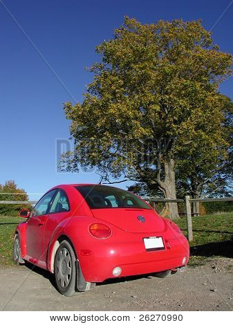 red new beetle with blue sky