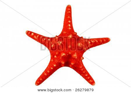 A red starfish on isolated white background