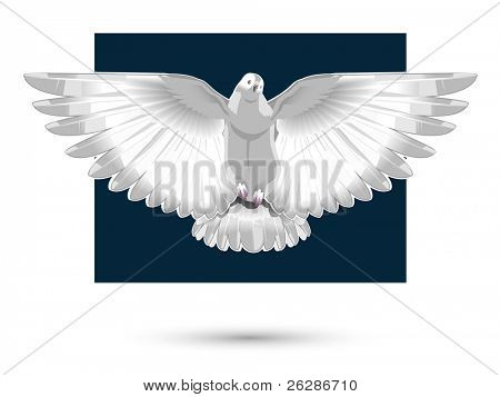 white dove, vector
