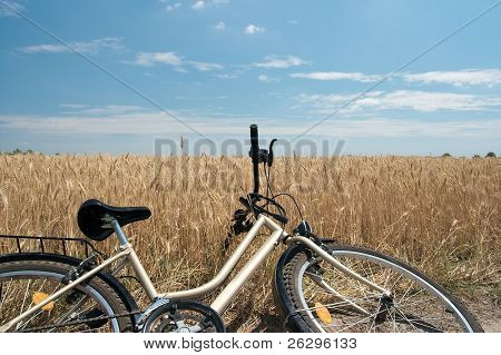 Bicycle put down by an agricultural field