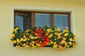 Three-piece Wooden Euro-window / Plastic Window And Boxes With Yellow And Red Begonia.cases With Yel poster