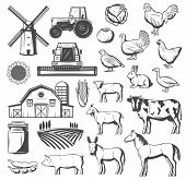 Farming, Agriculture And Cattle Icons. Vector Tractor, Windmill Or Grain Barn And Arable Field, Farm poster