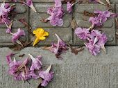 Background Of Flowers Fallen On A Concrete Floor In A Footpath With Contrast Of Yellow And Pink Copy poster