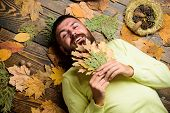 Man Bearded Smiling Face Lay On Wooden Background With Orange Leaves Top View. Hipster With Beard En poster