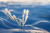Background; Beautiful; Beauty; Blue; Bokeh; Branch; Bright; Christmas; Closeup; Cold; Color; Detail; poster