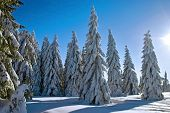 stock photo of winter scene  - winter landscape with sunbeam - JPG