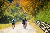 Cycling, mountain biker on cycle trail in autumn forest. poster