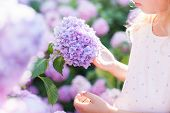 Big Hydrangea Flower Is In Girls Hand In Sunset Garden. Bushes Of Flowers Are Pink, Blue, Lilac And  poster