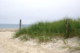 picture of cape-cod  - A beach in the summer on the Atlantic Ocean - JPG