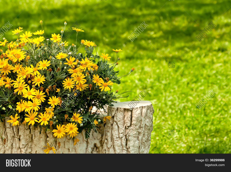 mesa de jardim jumbo : mesa de jardim jumbo: de jardim com margaridas amarelasBanco de Fotos & banco de Imagens