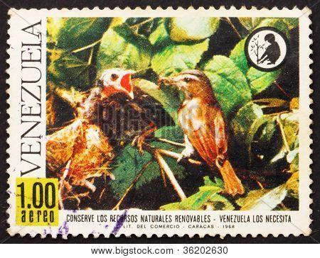 Postage stamp Venezuela 1968 Red-eyed Vireo Feeding Cowbird