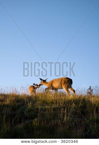 Mommy Deer