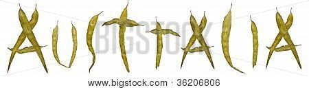 Eucalyptus Gum Leaf Australia Title Banner