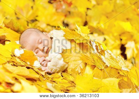 Autumn Newborn Baby Sleeping In Maple Leaves