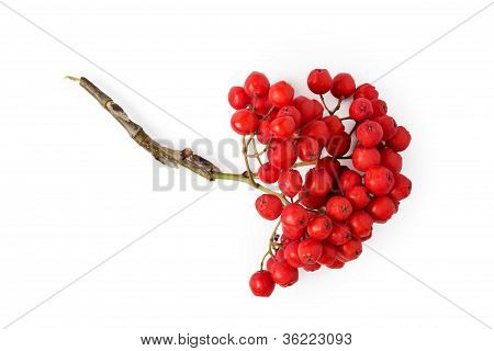 Rowanberries