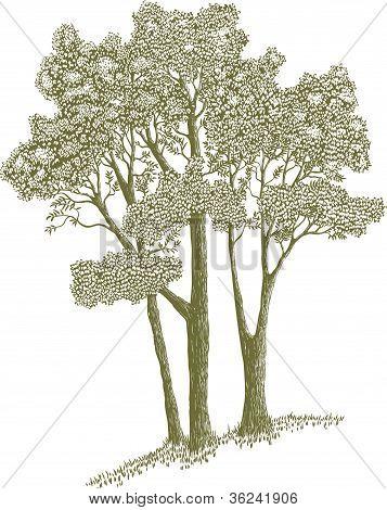 Woodcut Trees