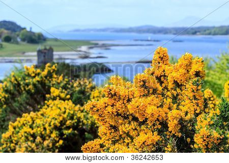 Colorful Yellow Flower In A Lake Landscape