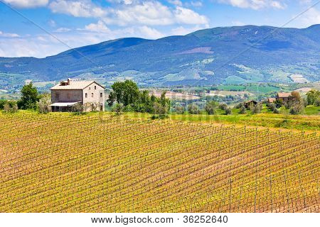 Farmhouse And Vineyard Landscape