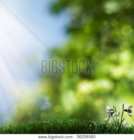 Misty Natural Backgrounds With Grass And Beauty Flowers