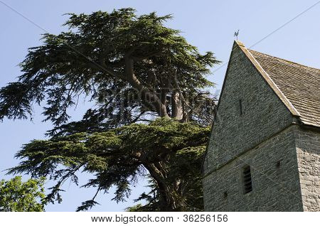 Church Tower With Saddleback, Slate Tiled Roof Next To Enourmous Pine Tree