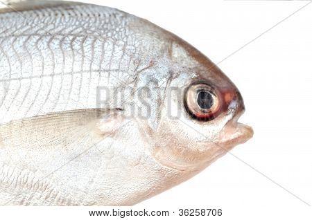 die Hälfte der Butter Fisch auf weiß