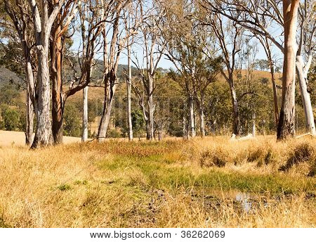 Rural Australia countryside water hole and gum trees
