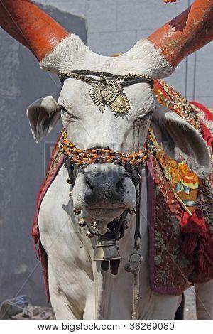 A decorated holy bull (Nandi bull)