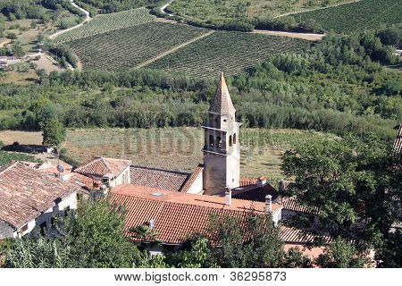 Roofs And Vineyards