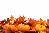stock photo of fall leaves  - Fall leaves with pumpkin on white background fall harvest - JPG