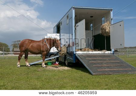 Horse Truck And Horse