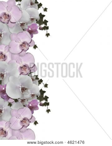 Orchids Border Lavender