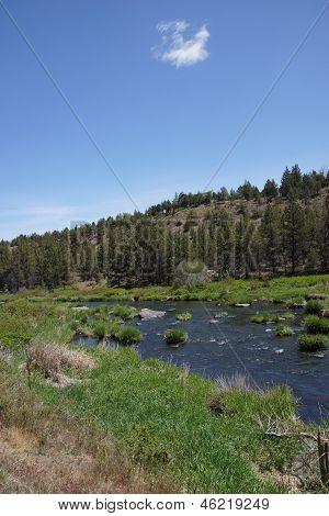 Conifer Forest Along The Deschutes River  In The High Desert Of Central Oregon, Near Redmond...