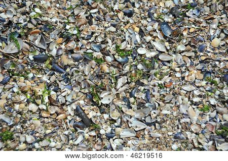 Shell and pebble stone background