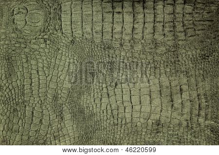 luxury crocodile texture or background