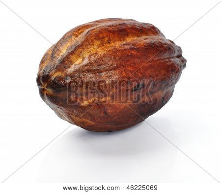 Fresh Cacao Fruit
